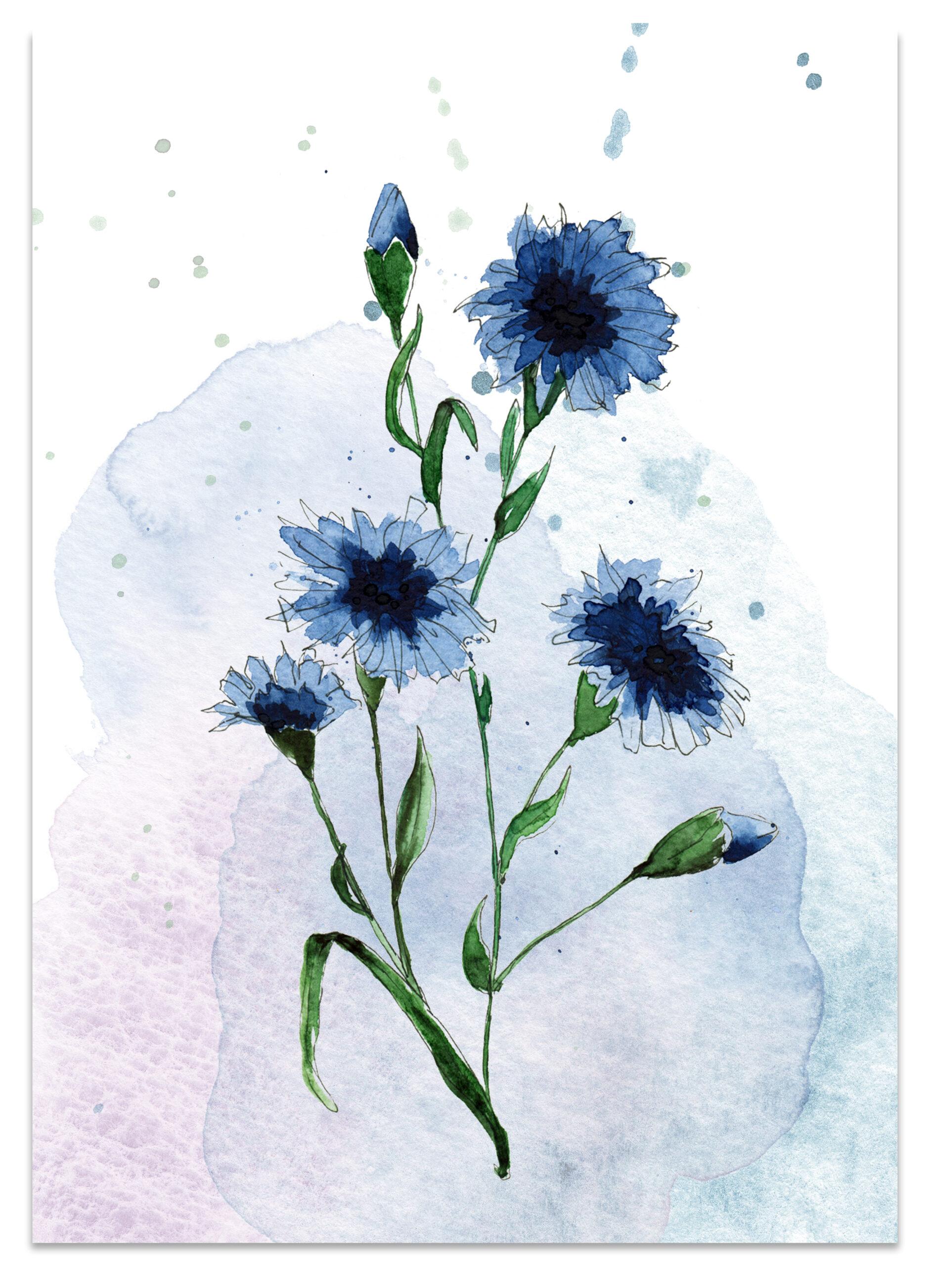 frame-kornblume