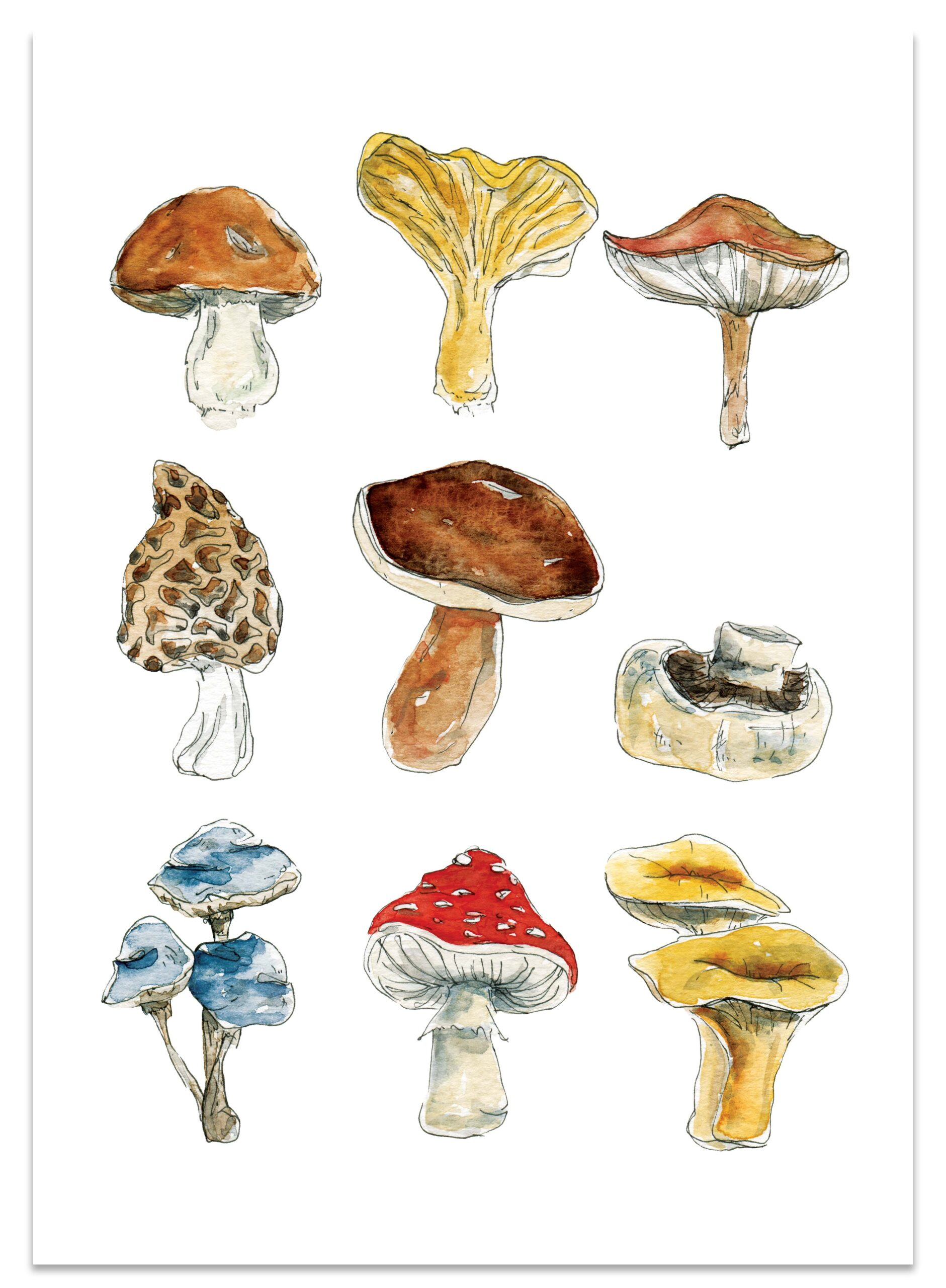 frame_mushrooms_paper_lions