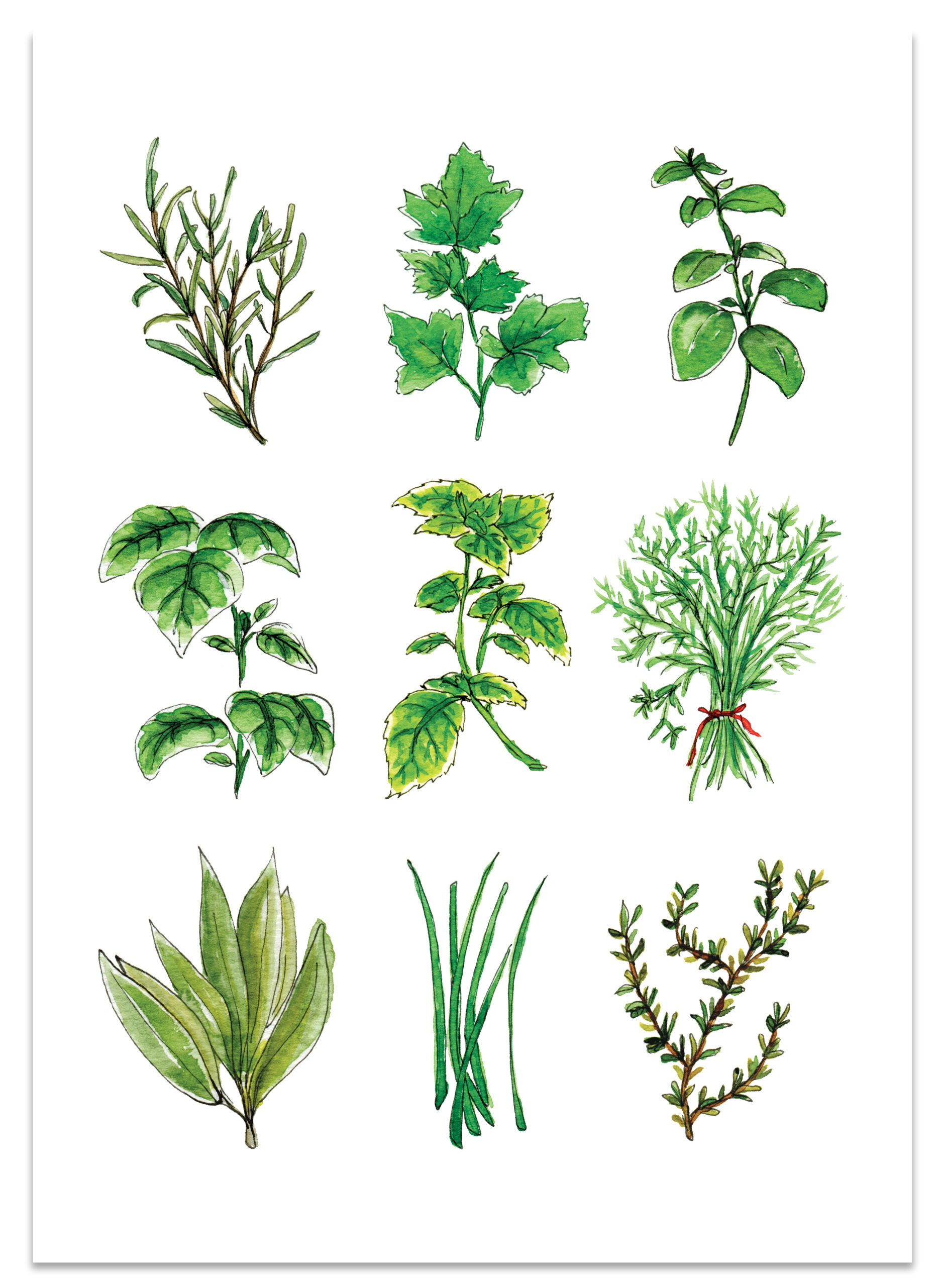 frame_herbs_paper_lions